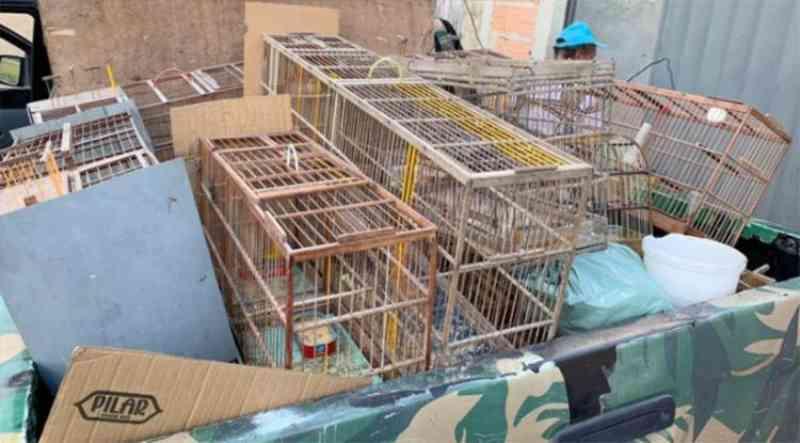 Idoso é detido com arma e mais de 40 animais silvestres em Eunápolis, BA