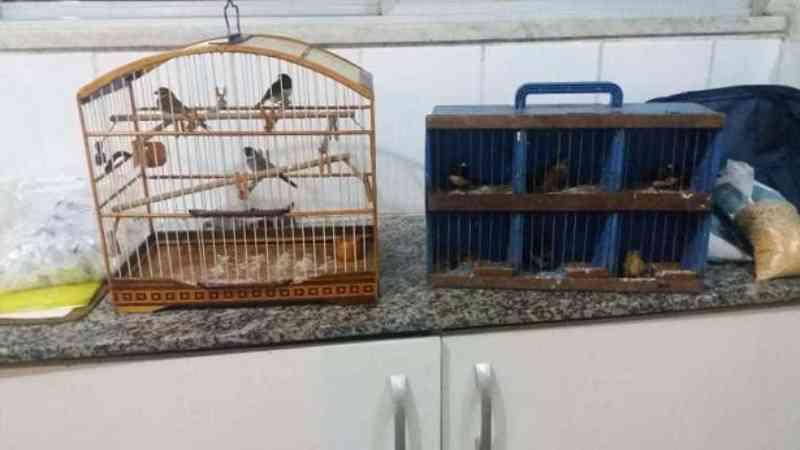 Animais são resgatados pela Polícia Federal em Ribeira do Pombal, BA