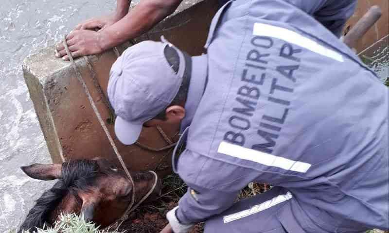 Cavalo cai em córrego de Salvador (BA) em dia chuvoso e é resgatado pelo Corpo de Bombeiros; VÍDEO