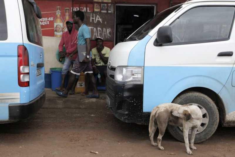 Cabo Verde eletrocuta cães com cabo de 380 volts introduzido no ânus