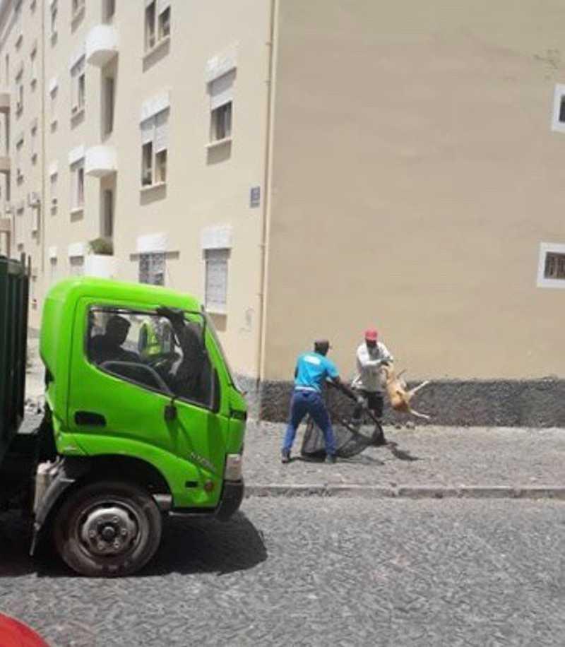 Cães deitados ao lixo e electrocutados geram indignação em Cabo Verde; vídeo