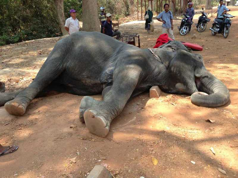 Camboja proíbe passeios de elefantes após duas mortes por exaustão