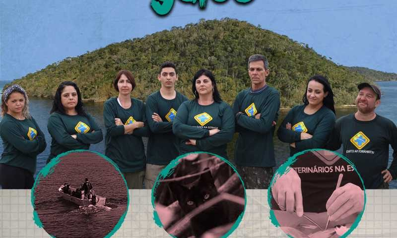 Documentário 'A Ilha dos Gatos' será exibido em evento sobre controle de gatos de vida livre em SP