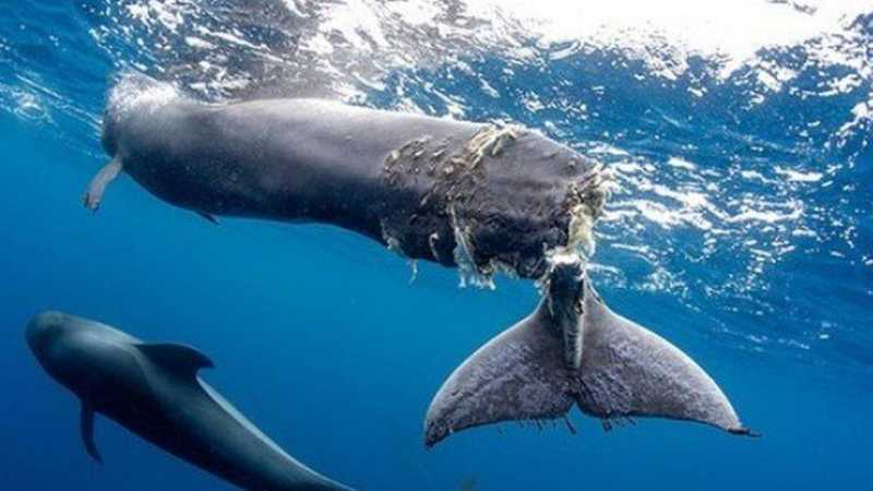 Filhote de baleia com cauda decepada é encontrado na costa da Espanha Foto: Francis Pérez/Reprodução Instagram