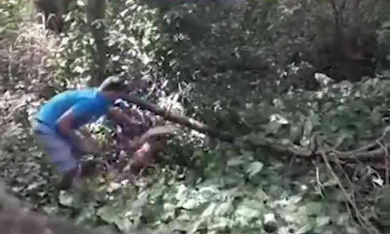 Homem que agrediu cadela na Serra (ES) é preso pela polícia