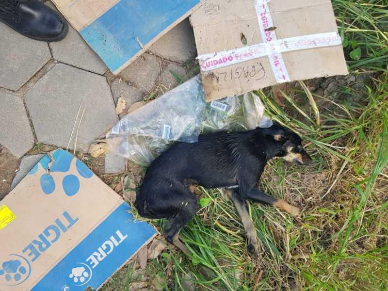 Militares resgatam cão ferido que havia caído no rio Veado, em Guaçuí; veja vídeo