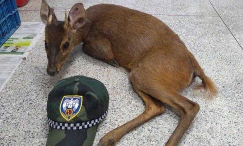 O animal foi encaminhado para o Centro de Triagem de Animais Silvestres (CETAS) - FOto: PM