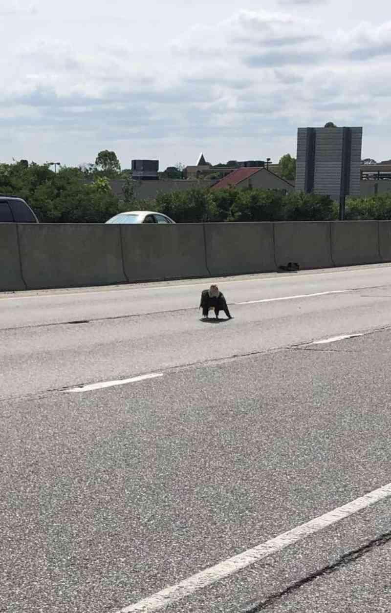 Um homem vê uma águia-americana no meio de rodovia e salva sua vida