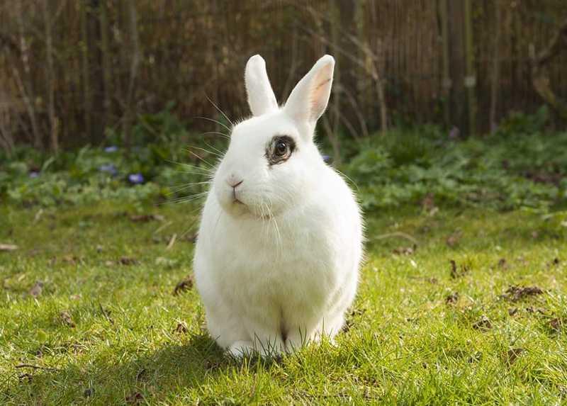 Nevada (EUA) proíbe venda de cosméticos testados em animais