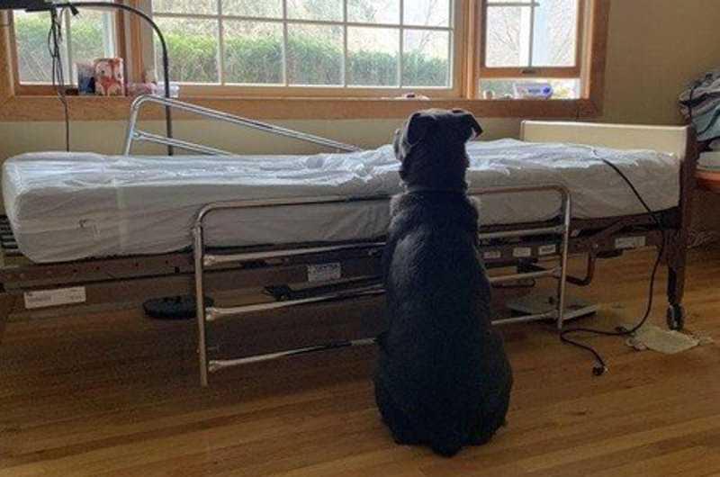 Cachorro segue ao lado de leito hospitalar após tutor morrer