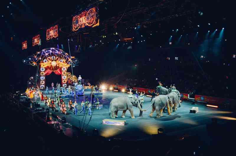 Petição: Apoie o projeto de lei para proibir animais selvagens em circos nos EUA!
