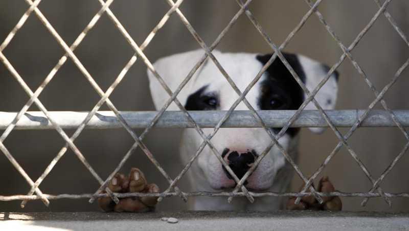 Cerca de 60.000 animais são abandonados todo ano somente durante o verão na França. - JOEL SAGET / AFP