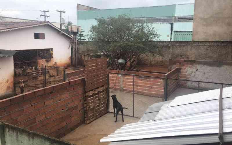 Instituição que cuida de 230 animais recebe ordem de despejo e precisa de ajuda para construir abrigo em Goiânia, GO