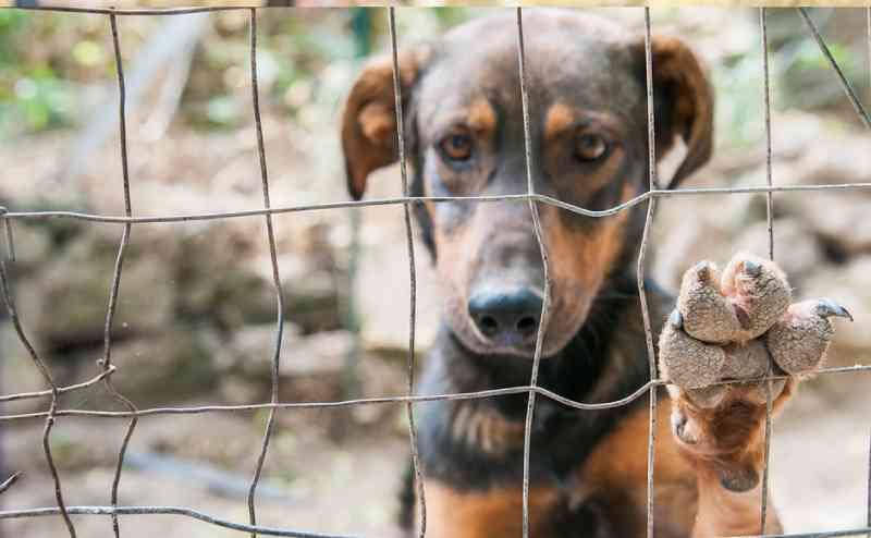 Lei prevê que pessoas que maltratam animais paguem por despesas veterinárias em Goiânia, GO