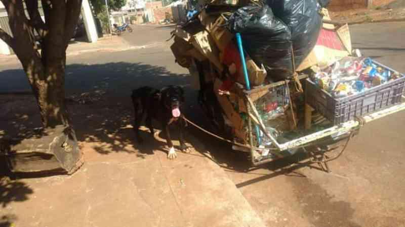 Polícia resgata cachorro usado para puxar carrinho em Rio Verde, GO