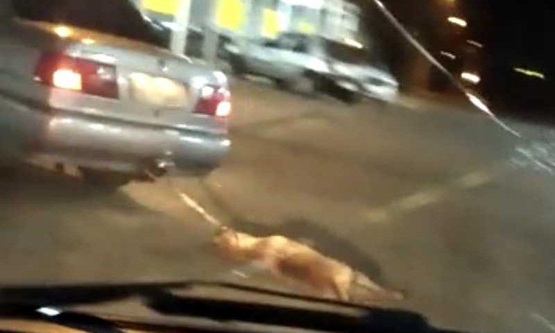 Vídeo mostra quando cachorro é arrastado por carro em Aparecida de Goiânia, Goiás — Foto: Arquivo pessoal