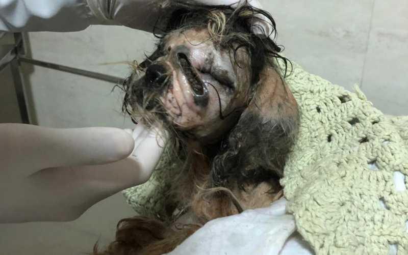 Protetores precisam de ajuda para tratamento de cão abandonado dentro de saco em rua de Aparecida de Goiânia, GO