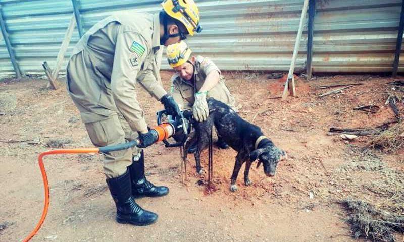 Cachorro fica preso em armação de ferro em obra de Caldas Novas — Foto: Corpo de Bombeiros/Divulgação