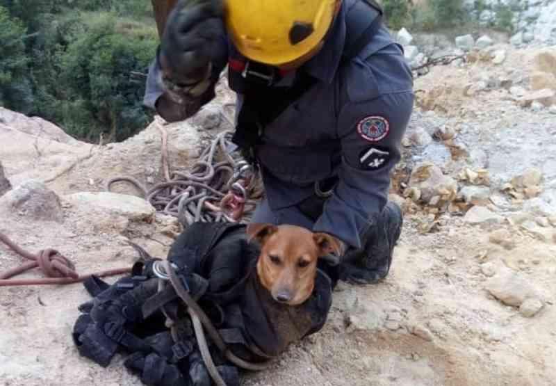 Cachorro preso em buraco de 45 metros de profundidade é resgatado por bombeiros em Belo Horizonte, MG