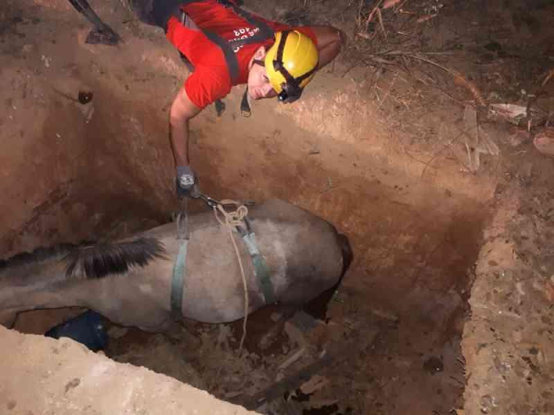 Bombeiros resgatam égua prenha de um buraco de três metros na zona rural de Montes Claros, MG