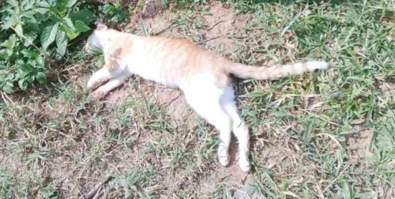 Polícia Civil cumpre mandado e investiga morte de animais por envenenamento em cidade do Sul de Minas