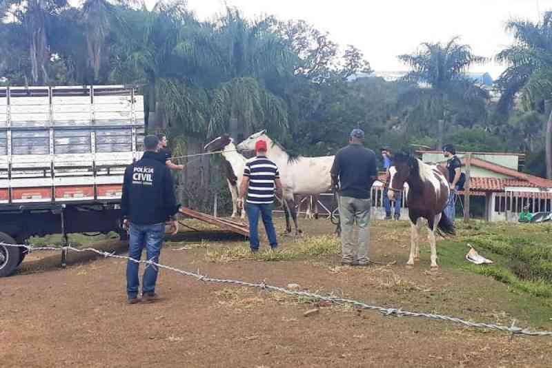 Flagrante de maus-tratos de animais é feito pela Polícia Civil em Uberlândia (MG) durante operação