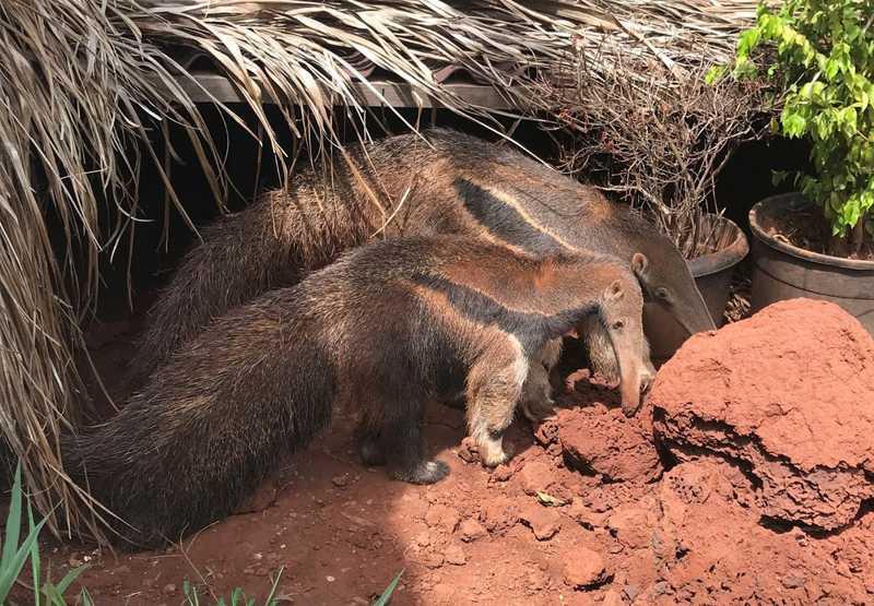 Animais são recebidos no Centro de Triagem de Animais Silvestres (Cetas) de Juiz de Fora — Foto: IEF/Divulgação