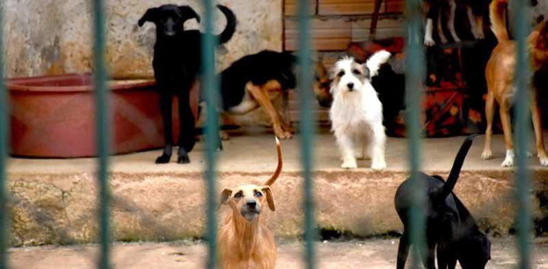 Castração, chipagem e identificação de animais serão realizadas no CCZ em Pará de Minas, MG
