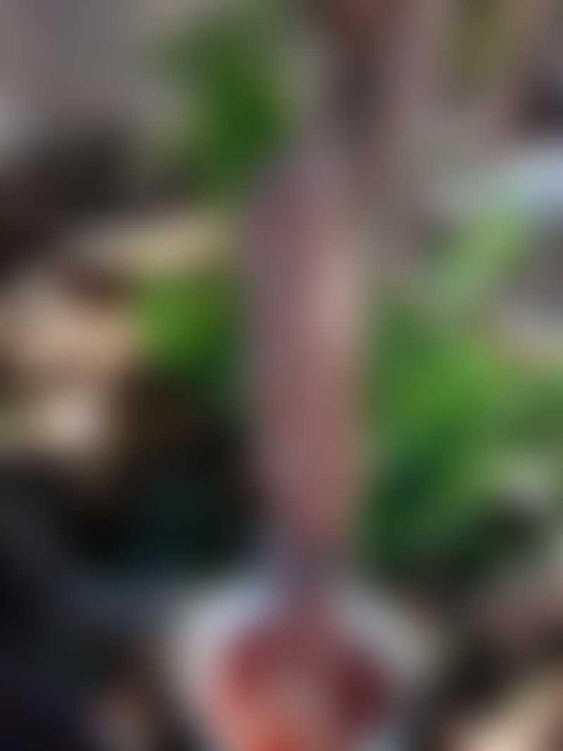 VÍDEO: mulher mata, retira vísceras de cachorro e guarda corpo de animal em tambor