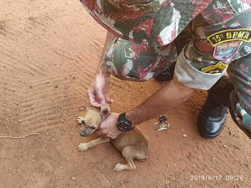 Mulher é autuada e multada por maus-tratos a animais domésticos em Batayporã, MS