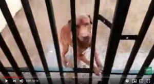 CCZ de Campo Grande (MS) afirma que só a polícia poderia resgatar cão de maus-tratos, mas lei diz o contrário