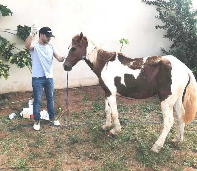 SIM atende denúncia de abandono e maus-tratos a cavalo em Batayporã, MS