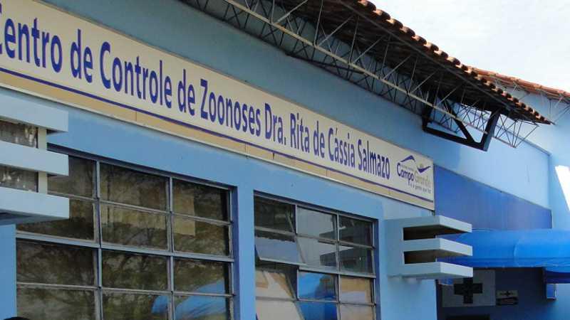 Agendamento para castração de gatos começa na próxima semana em Campo Grande, MS