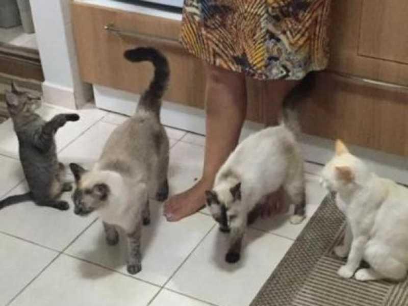 Vídeo mostra pessoa abandonando gatos em frente a residência pela 5ª vez