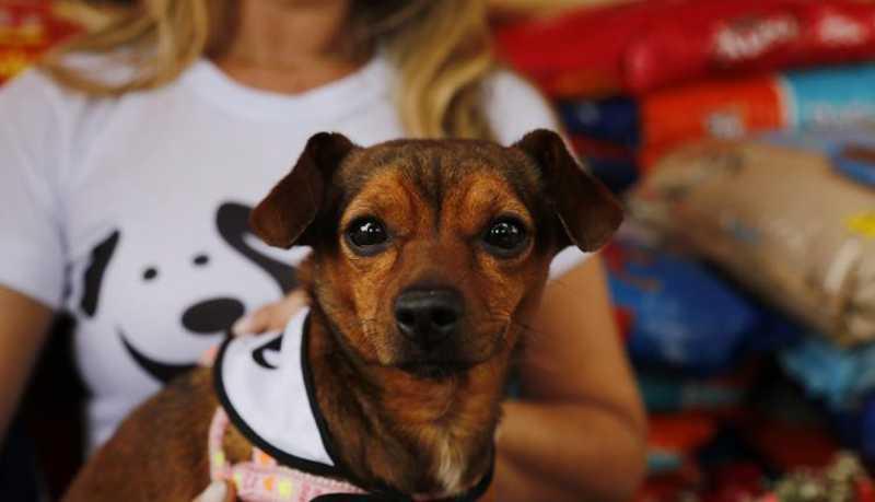 Ação Conjunta irá ajudar 600 animais de abrigos de Campo Grande, MS