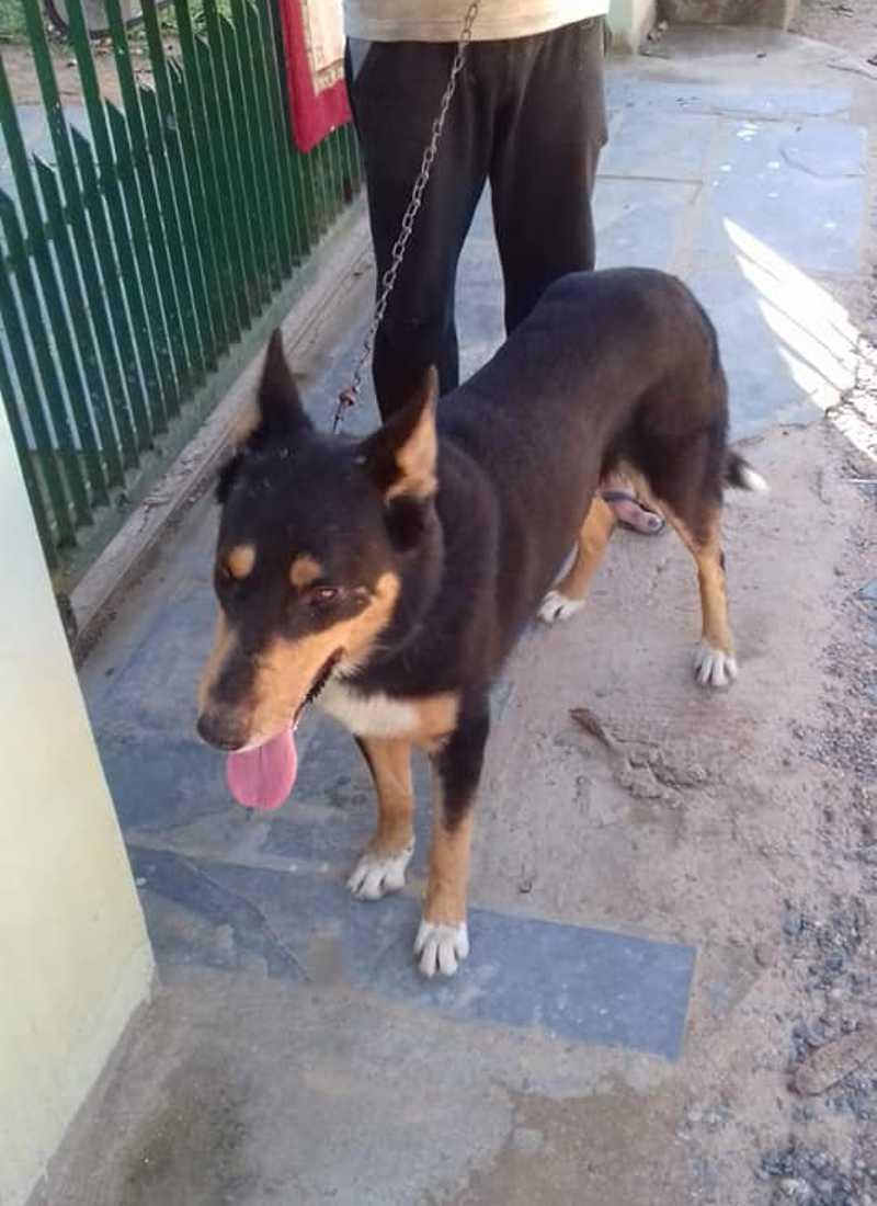 Mulher procura motorista de Gol prata que abandonou cachorro em Campo Grande, MS