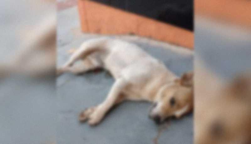 No aguardo pela UPA-VET, tutores de animais atropelados em Campo Grande (MS) recorrem às redes sociais