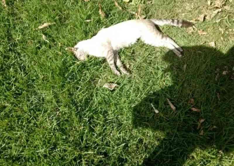 Mais de 20 cães e gatos são mortos com suspeita de envenenamento em Cuiabá