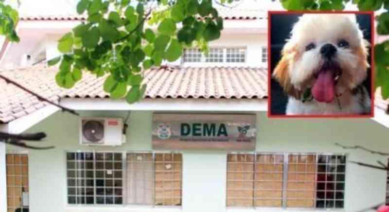 Morador de Cuiabá (MT) relata que passou por cima de cachorro e achou ser melancia