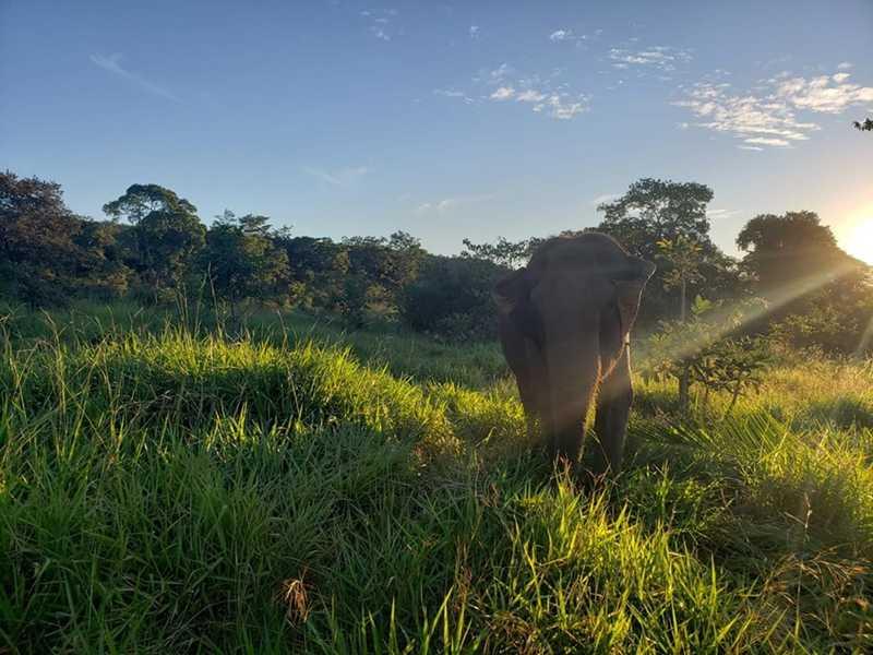 Elefanta Guida morreu no Santuário de Elefantes da América Latina, localizado em Chapada dos Guimarães — Foto: Santuário de Elefantes Brasil (SEB)