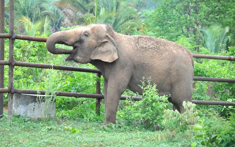 Elefanta Guida quando chegou no Santuário, em 2016 — Foto: Carolina Holland/G1