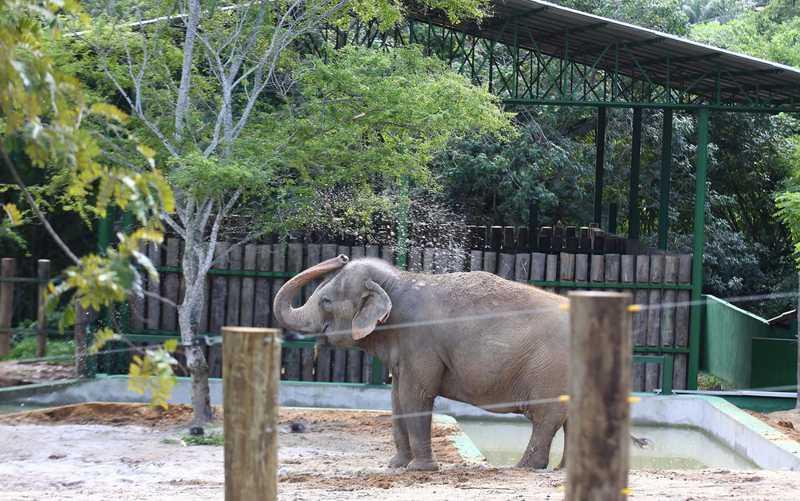 Elefanta Lady se instala em seu espaço no Parque Arruda Câmara, em João Pessoa — Foto: Alessandro Potter/Secom-JP