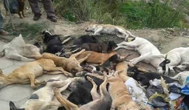 Matança de animais: mais de 30 cães amanheceram envenenados no Vale do Piancó, PB