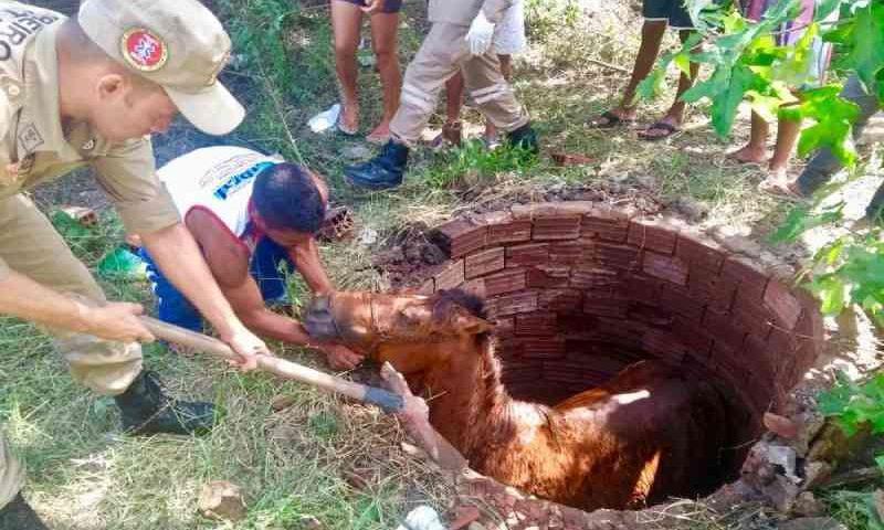 Cavalo cai em poço e é resgatado por bombeiros após duas horas de operação