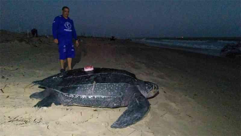 Tartaruga gigante é a primeira a ser monitorada via satélite no Piauí