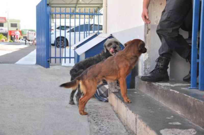 Cãezinhos ganham casinhas e camas para fugir do frio em Araucária, PR