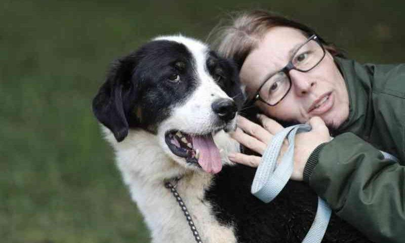 Cães e gatos ficam até dois anos à espera de adoção em abrigo da prefeitura de Curitiba, PR