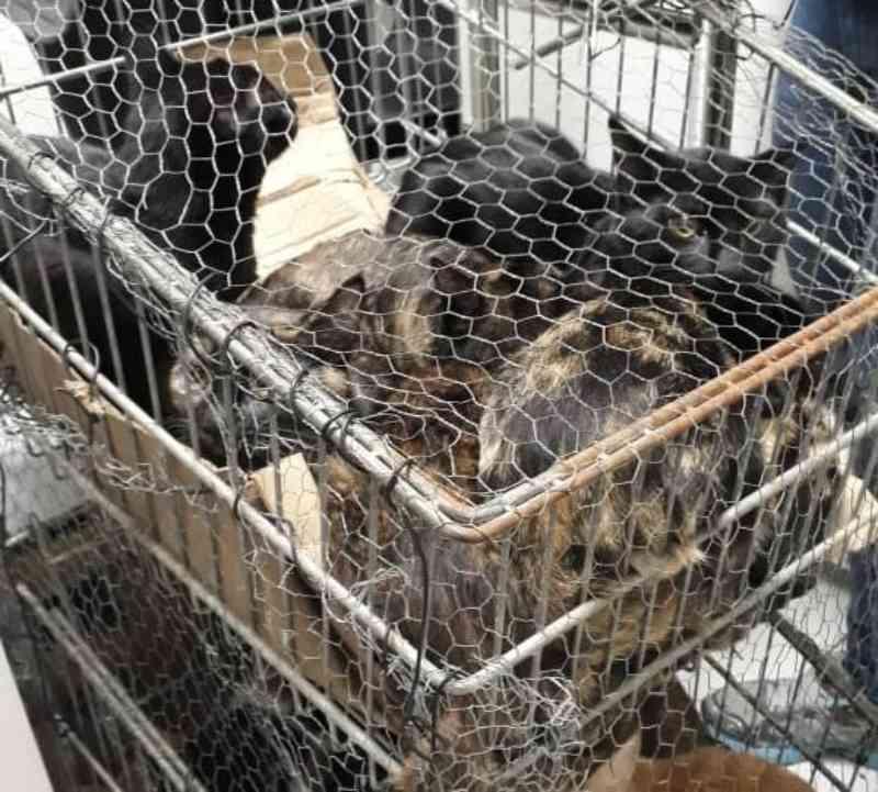 Homem que abandonou 19 gatos presos em carrinho de supermercado já foi identificado