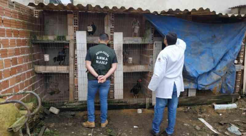 Homem é autuado em flagrante por maus-tratos a galos, em Curitiba, PR