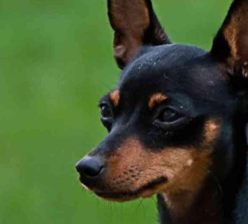 Homem é preso após espancar cachorro em Godoy Moreira, PR